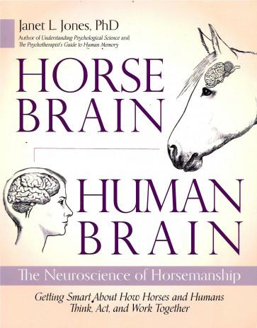 Horse Brain Human Brain