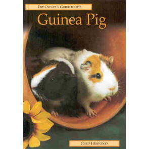 Guinea pig, pet owner's guide to