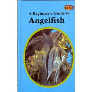 Angelfish, a beginner's guide to