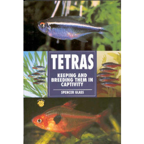 Tetras - keeping and breeding them in captivity