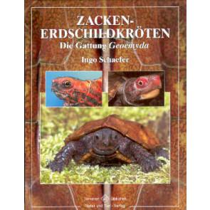 Zackenerdschildkröten