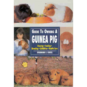 Guide to owning a Guinea Pig