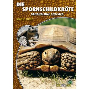 Die Spornschildkröte