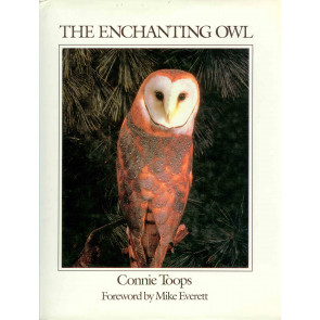 Enchanting owl