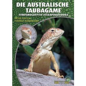 Die Taubagame (Tympanocryptis tetraporophora)