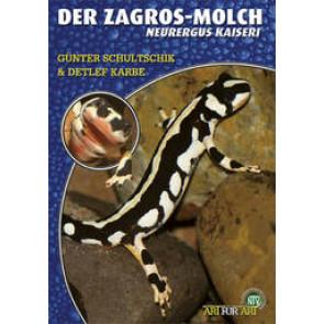 Der Zagros-Molch (Neurergus Kaiseri)