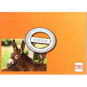 Esel - Postkartenset (10 Stück)