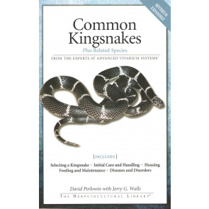 Common Kingsnaken