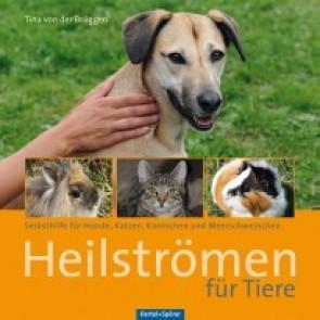 Heilstromen für Tiere