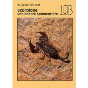 Skorpione und andere spinnentiere