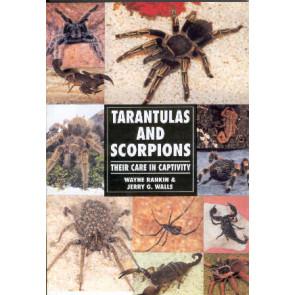 Tarantulas & Scorpions