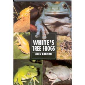 White's Tree Frogs