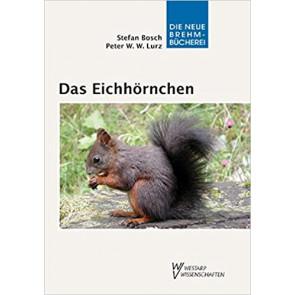 Das Eichhörnchen
