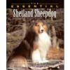 The essential Shetland Sheepdog