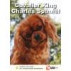Cavalier King Charles Spaniël