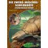 Die Zwerg-Moschus-Schildkröte