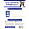 Tips for Perfect Potty Training Every Time