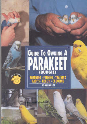 Guide to owning a Parakeet (Budgie)